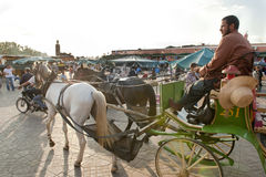 Coachman with horse drawn carriage in evening sun at Jemaa el-Fnaa Square, Marrakech,Morocco