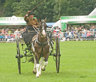 Carriage driving competition. Stock Photos