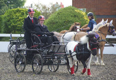 Carriage driving Stock Photos