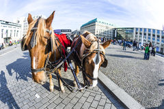 Carriage in front of Brandenburg Gate Royalty Free Stock Photography