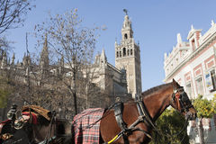 Carriage in Giralda Royalty Free Stock Images
