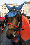Carriage horse with crochet ear protectors Stock Photos