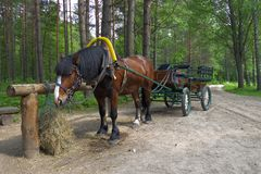 Carriage horse in forest. Cart horse stop on forest road in summer Royalty Free Stock Image