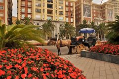 Carriage with horse in Malaga spain Stock Photo