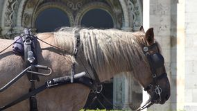 A carriage horse. An outdoor scene in a city stock video