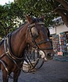 Carriage Horse in Seville the artistic, cultural, and financial capital of southern Spain. The principal Moorish and Gothic buildings in the old quarter of Royalty Free Stock Photography
