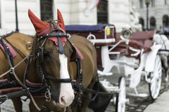 Carriage horse, Vienna Stock Photography