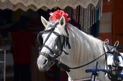 Carriage horse Stock Photos