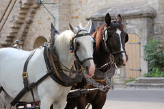 Carriage horses in front of stone wall. Horses hitched to a carriage within the walled town of Rothenburg ob der Tauber, Germany Stock Image