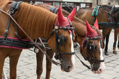 Carriage horses Royalty Free Stock Images