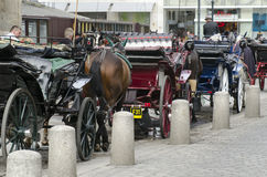 Carriage horses at Stephansdom Cathedral in Vienna Stock Images