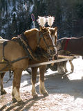 Carriage horses in Switzerland Stock Photo