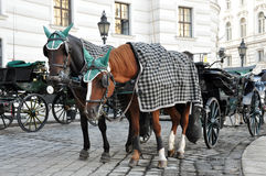 Carriage with horses Royalty Free Stock Photo