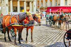 Carriage horses walking in the streets of one of the most beautiful European cities - Vienna.Austria Stock Photo