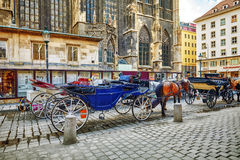 Carriage horses walking in the streets of one of the most beautiful European cities - Vienna.Austria Royalty Free Stock Photography