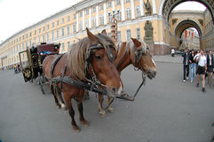 Carriage near the Hermitage in St. Petersburg Royalty Free Stock Photos