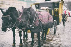 Carriage near the Winter Palace. Stock Images