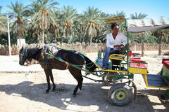 Carriage in oasis Royalty Free Stock Photography