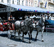 Carriage pulled by horses on the Prague street Royalty Free Stock Photos