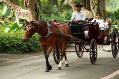 Carriage ride. Tourists riding horse Carriage in Singapore zoo royalty free stock photos