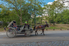 Carriage Ride in Central Park. Central Park, NY US -- August 31, 2016. A ride with a horse and carriage through Central Park on a summer afternoon. Editorial Use Royalty Free Stock Photo