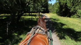 Carriage Ride, Chile stock video