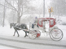 Carriage in the snow. White and red carriage in snow storm, Central Park, New York Stock Image