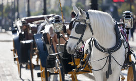 Carriage spanish Stock Photography