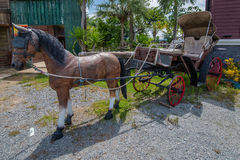 Carriage static. Show in park Royalty Free Stock Image