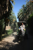 Carriage in tunisian oasis Stock Photos
