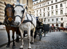 Carriage with two horses on Vienna street. Horse-driven carriage at Hofburg palace, Vienna, Austria Royalty Free Stock Photo