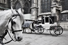 Carriage in Vienna Stock Photo