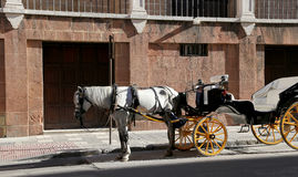 Carriage waiting for passengers in Malaga, in front of Malaga´s Cathedral, Andalusia, Spain Royalty Free Stock Images
