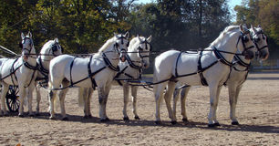 Carriage and white six Stock Photo