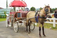The carriages. For sightseeing.The parking stops stock photography