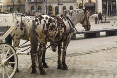 Carriages in krakow Stock Image