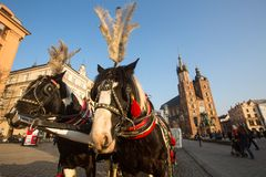 Carriages at Main Market Square. Stock Photo