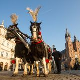 Carriages at Main Market Square. It is the largest medieval town square in Europe. Royalty Free Stock Images