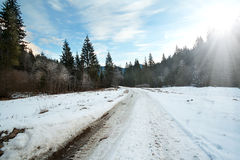 Carriageway road in the winter forest Stock Photos