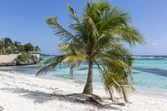 Carribbean palm tree Royalty Free Stock Photos