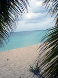 carribean όψη δέντρων του Πουέρτο Ρίκο φοινικών Στοκ Εικόνες