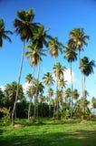 有棕榈树的美丽的热带庭院在豪华carribean关于 库存图片