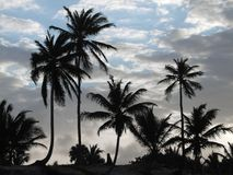 Carribean evening scenery Royalty Free Stock Image