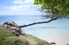 Carribean Paradise. Carribean Cayo levantado - so called Bacardi Island in the Dominican Republic and its lonely tree Royalty Free Stock Photo