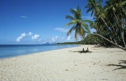 carribean strand Arkivbild