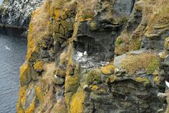 Carrick a Rede Island. Carrick-a-Rede is an island in Northern Ireland off the coast of County Antrim between Ballycastle and Ballintoy. The island is connected stock images