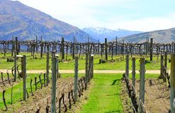 Wine Trail Queenstown, New Zealand royalty free stock image