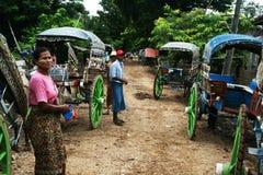 Carrieges Burmese Immagini Stock Libere da Diritti