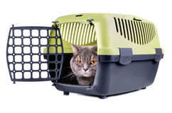 Carrier box with cat. Plastic carrier box with gray cat inside on a white background royalty free stock images