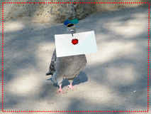 Carrier pigeon with letter. Postman: carrier pigeon with letter Stock Photos
